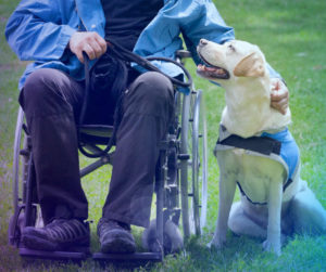 Assistance, Disability, Health, Home Care, Caregivers, Assistance dogs