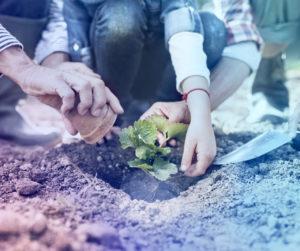 Home Care, Caregivers, Garden Duties, Elderly Activities